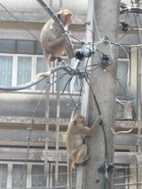 Monkey business in Lopburi